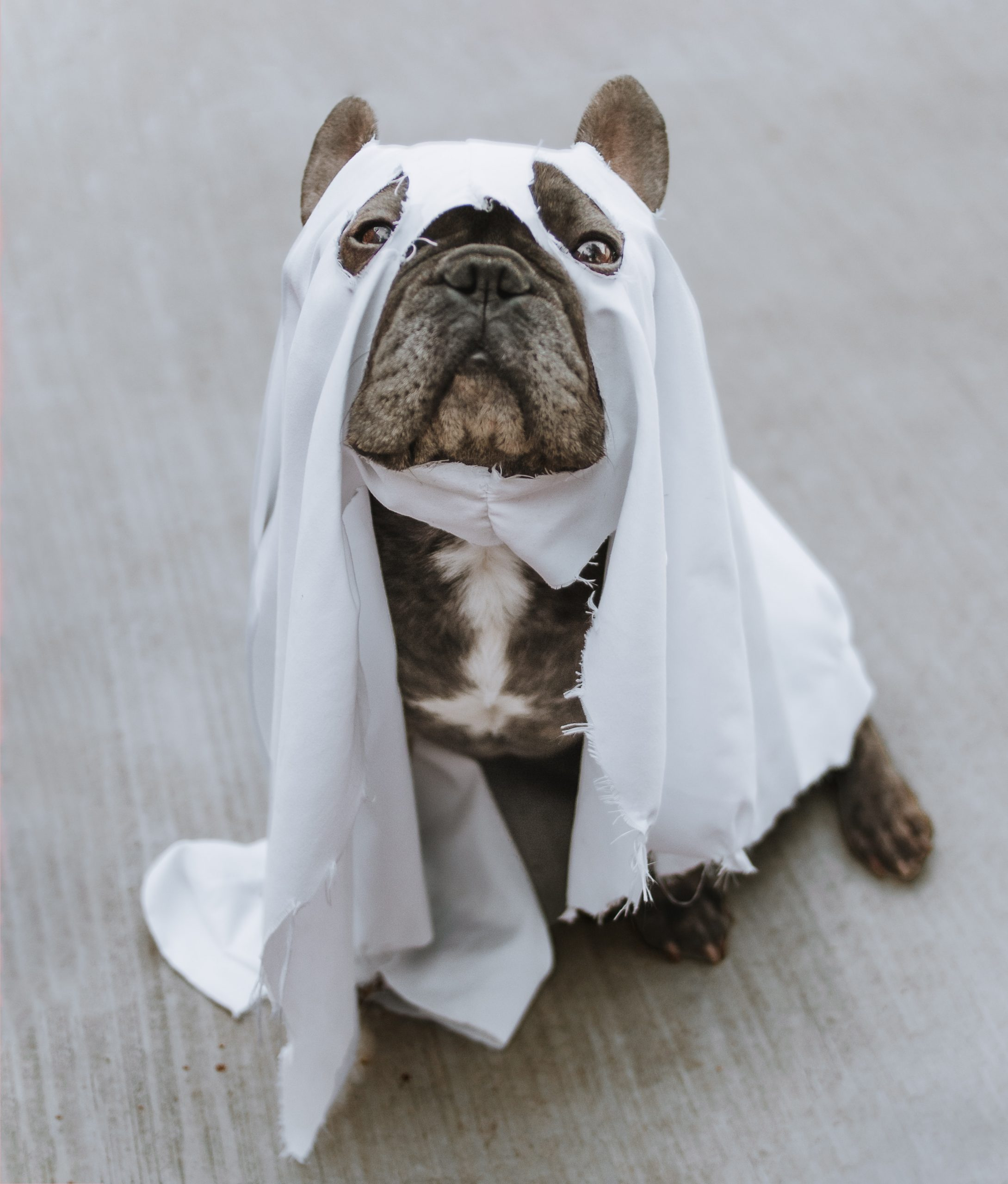 brown and white short coated dog in white textile